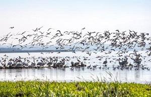 Balıkesir Manyas Manyas gölü Kuş Cenneti Gezi yazısı planı rehberi örneği  turları butik oteller